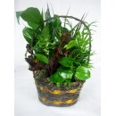 Dish Garden in a Basket
